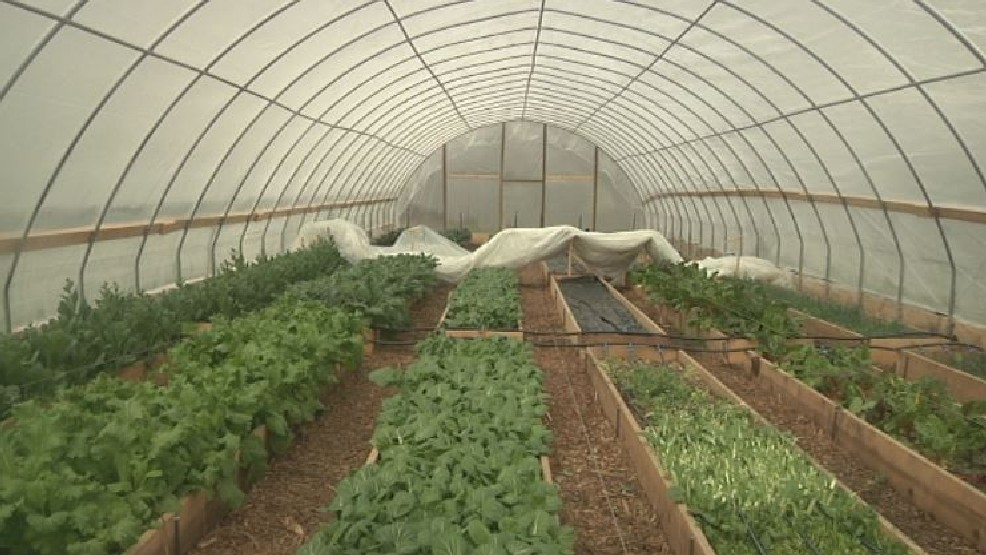Mild winter causes vegetable surplus at Refresh Appalachia